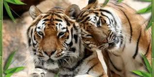 Camping La Source : Sorties En Famille zoo